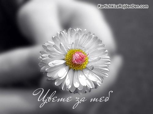 Цвете за теб